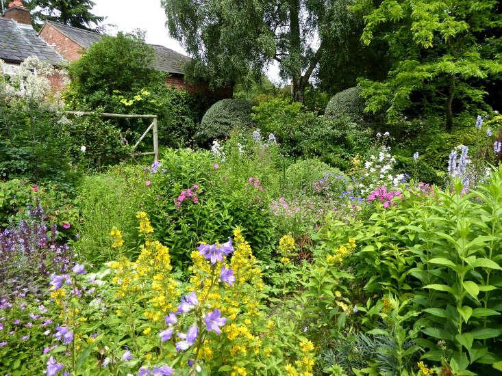 cottage-garden-perennials-flower-beds-sally-french-gardenista