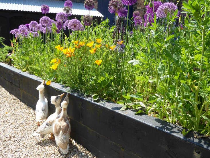 emma-bridgewater-arthur-parkinson-crested appleyard-ducks-gardenista