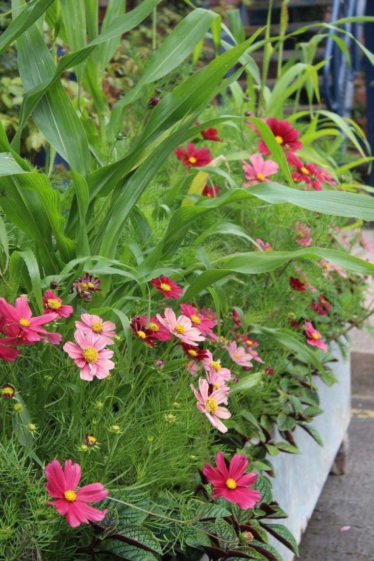Arthur Parkinson loves rich color: Dahlia &#8