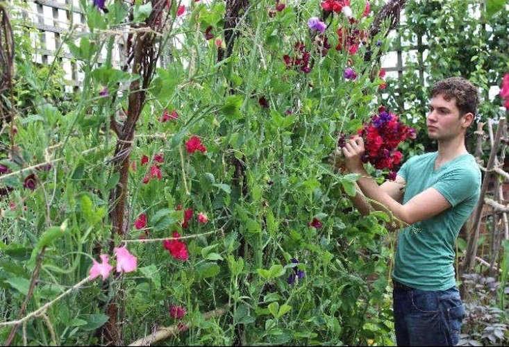emma-bridgewater-arthur-parkinson-sweet-peas-trellis-gardenista