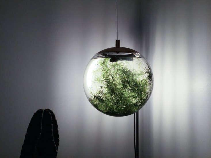 hanging-glass-terrarium-richard-clarkson-gardenista