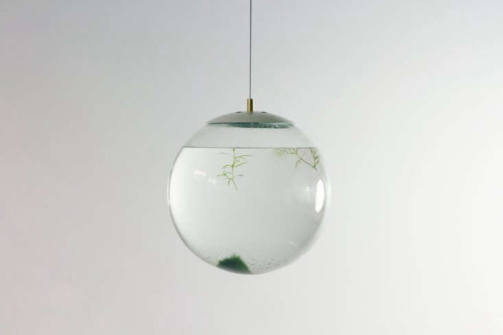 globe-terrarium-hanging-glass-gardenista
