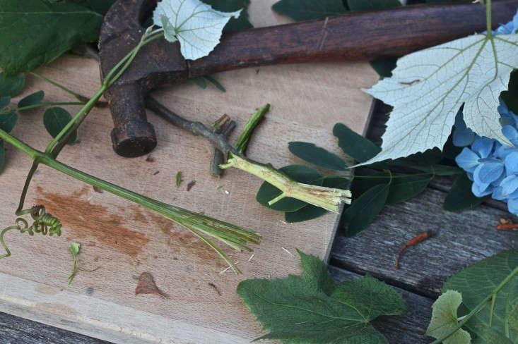 hammer-grape-stems-gardenista