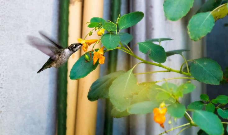 hummingbird_vincentmounier_gardenista