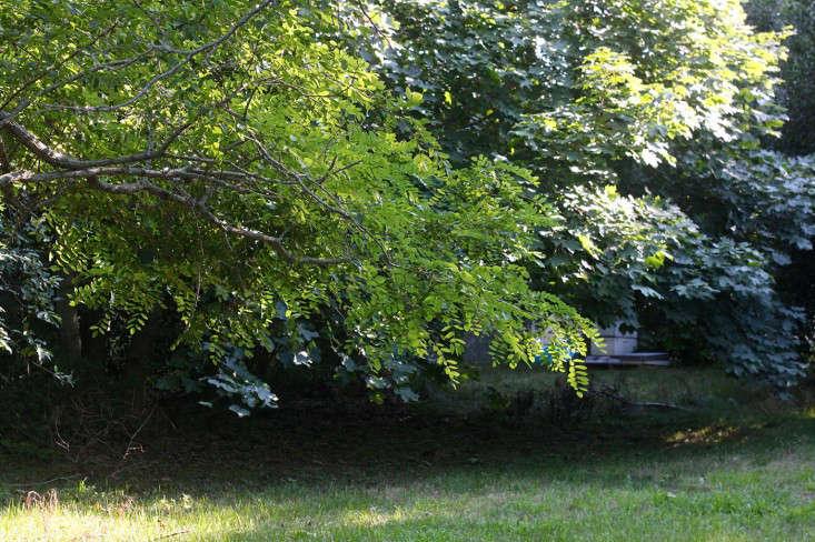 locust-tree-gardenista