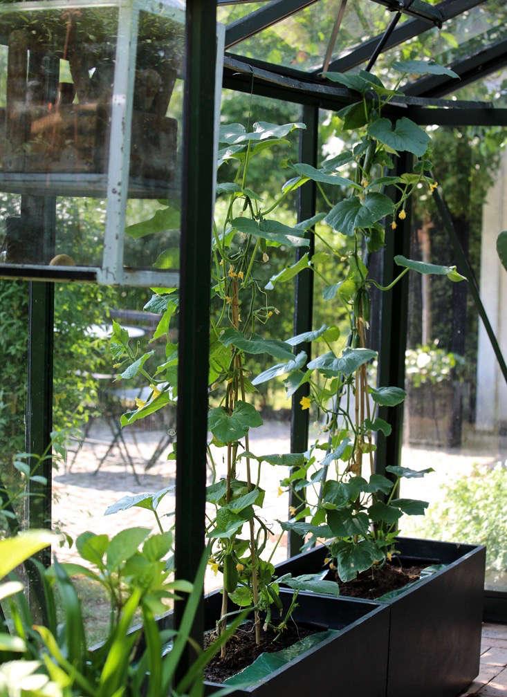 mette-krull-greenhouse-5-vines-planters-gardenista