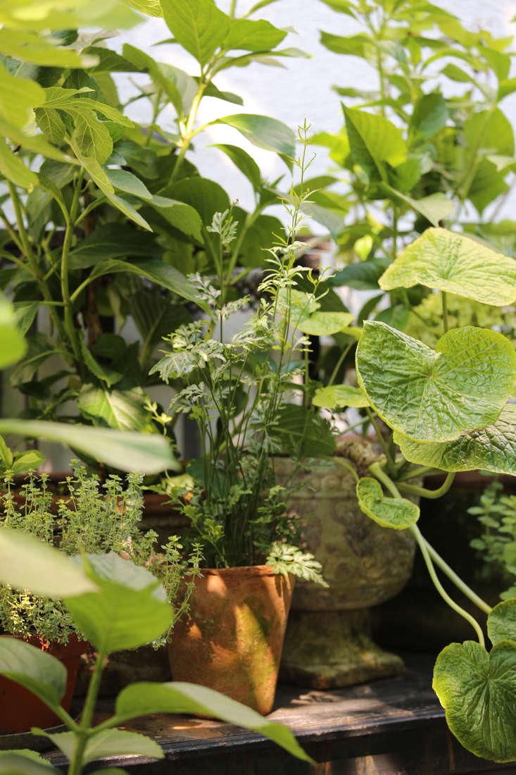mette-krull-greenhouse-6-gardenista