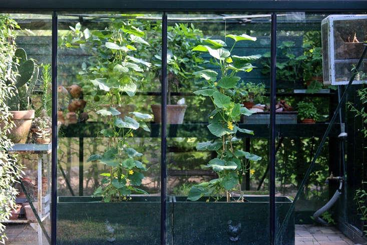 mette-krull-greenhouse-black-planter-3-gardenista