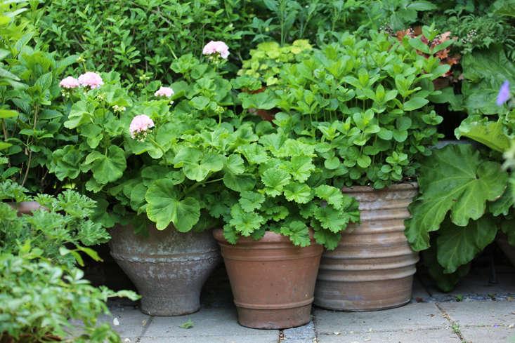 mette-krull-pots-2-gardenista