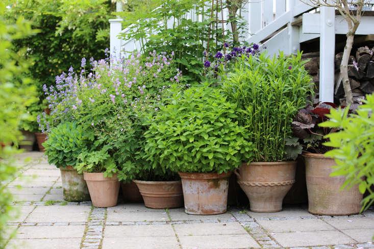 mette-krull-stair-view-gardenista