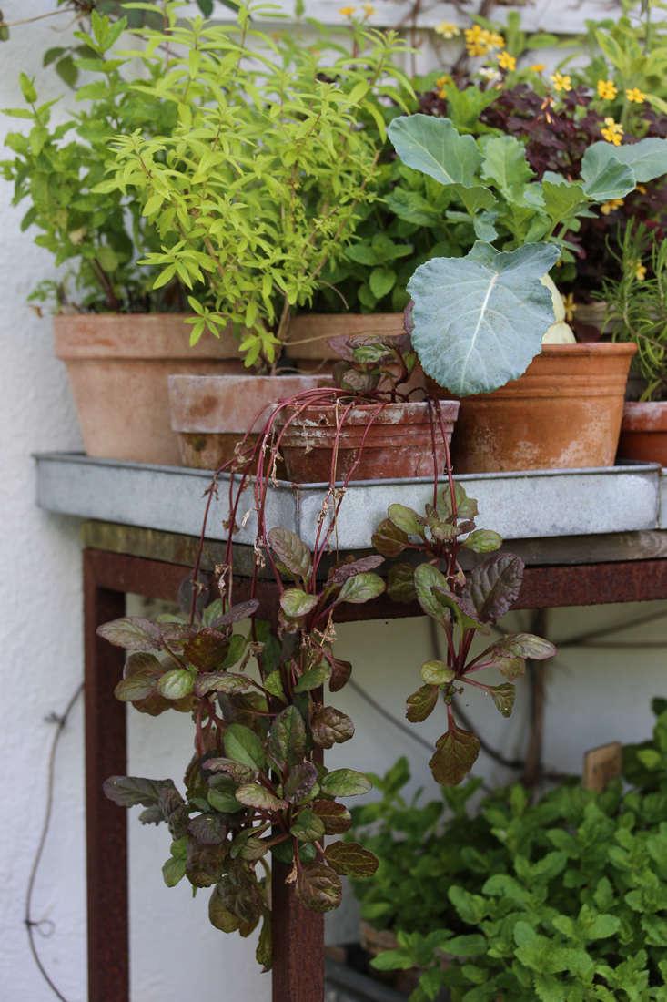 mette-krull-table-2-gardenista