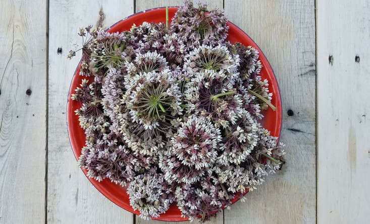 milkweed-flowers_marieviljoen-gardenista