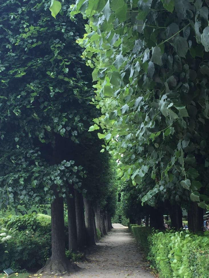 paris-allee-trees-shade-gardenista