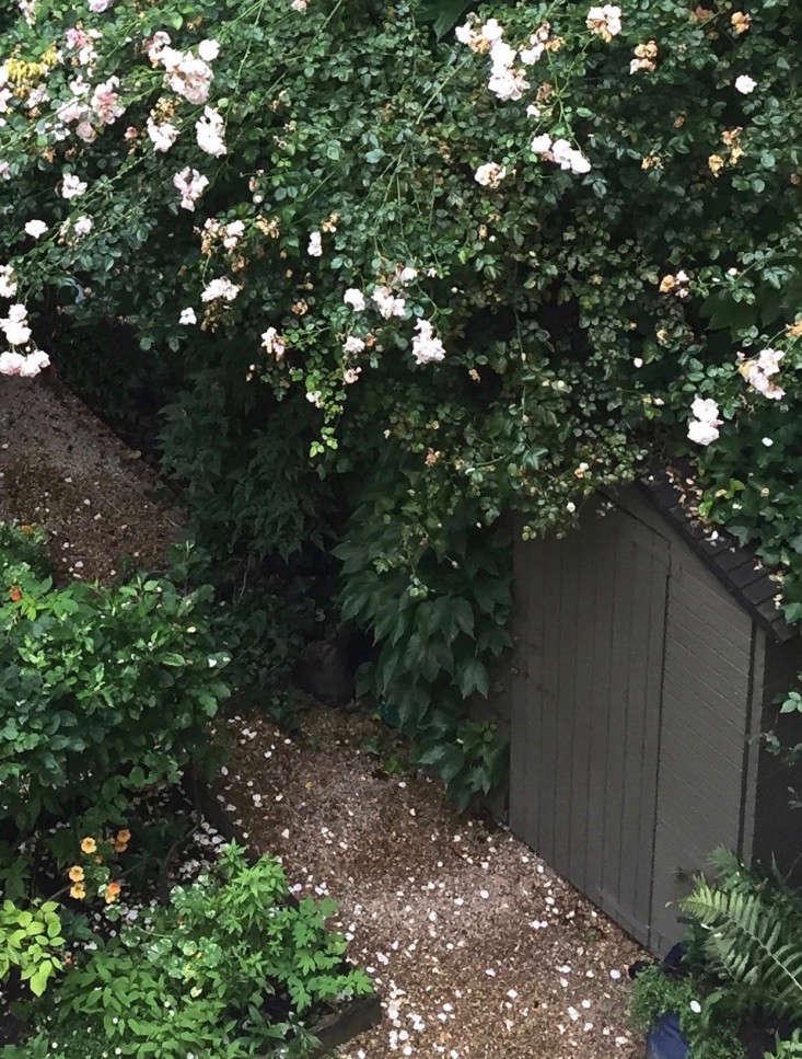 paris-garden-ideas-1-gardenista (2)