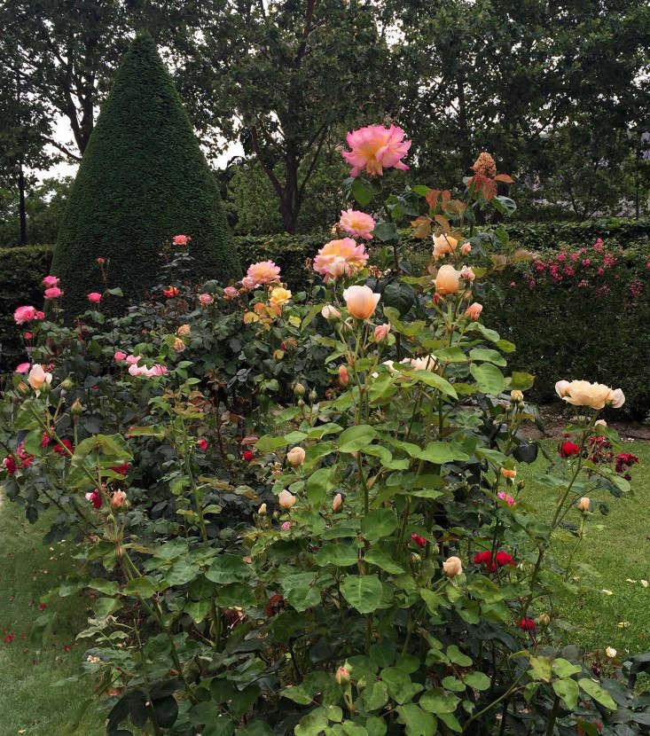 paris-mix-and-match-roses-gardenista-1