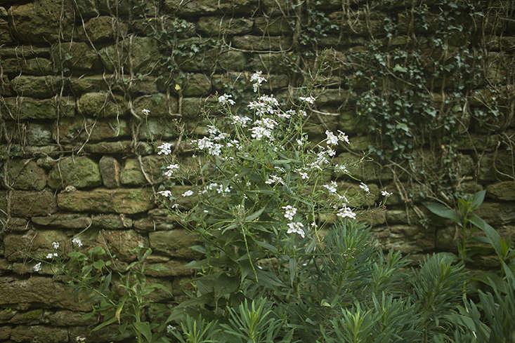 petra-stone-wall-jim-powell-gardenista
