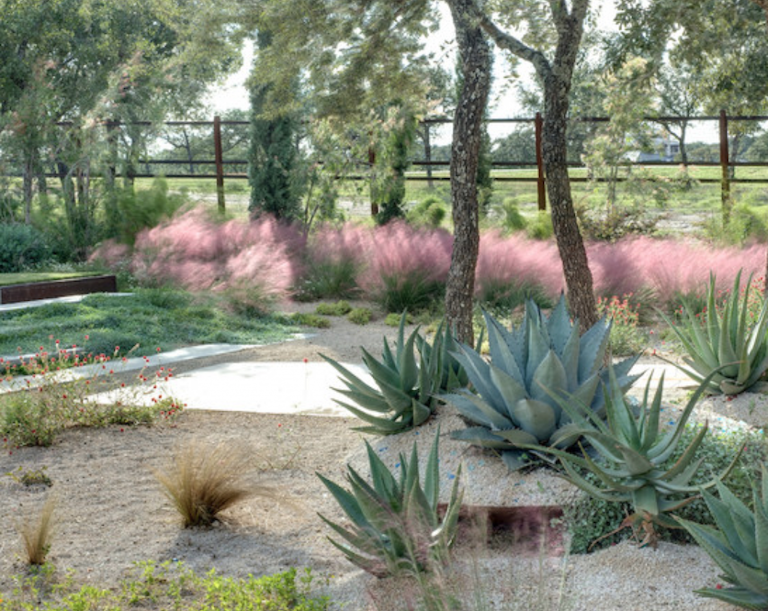 In the Texas hill country, a gravel garden designed by D-Crain relies on the inviting shape of pink Muhlenbergia to visually soften the sharper edges of nearby succulents. Photograph courtesy of D-Crain.