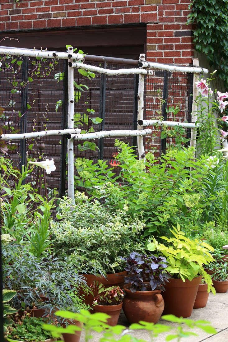 potted-plants-birch-trellis-marieviljoen-gardenista