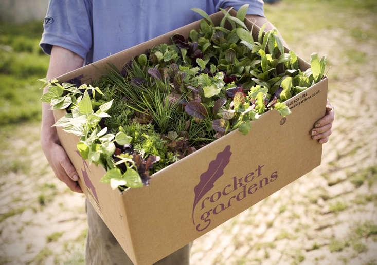 rocket-gardens-box-b-gardenista
