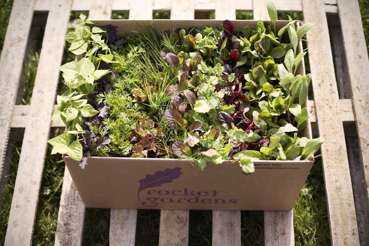 rocket-gardens-fresh-plants-in-box-a-gardenista