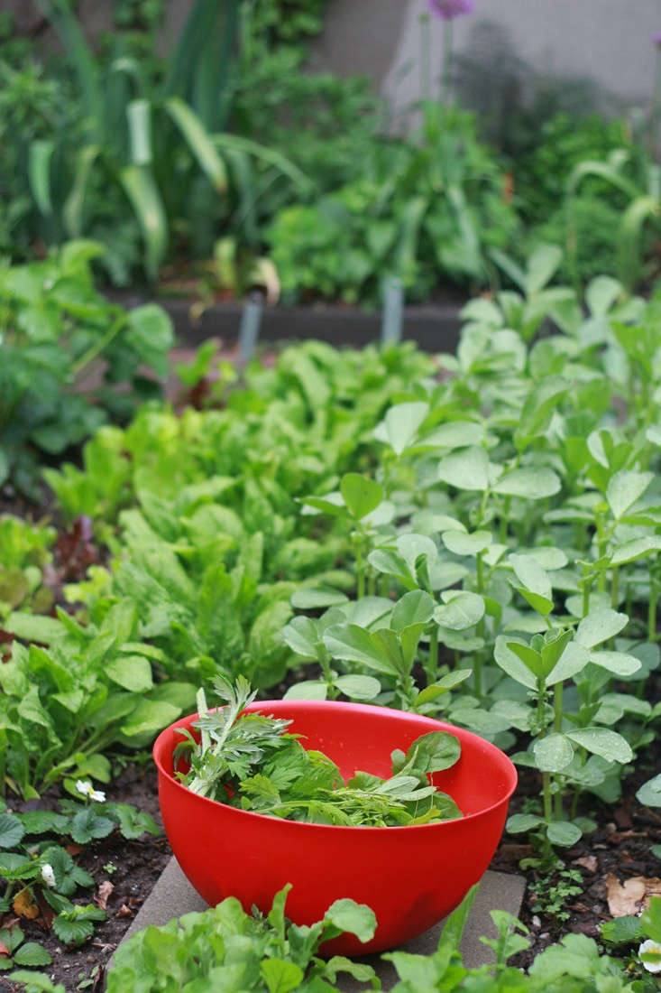 In Brooklyn, Marie Viljoen grows salad greens in her backyard vegetable garden. For more, see Rehab Diary: A Year in the Life of a New Brooklyn Garden.