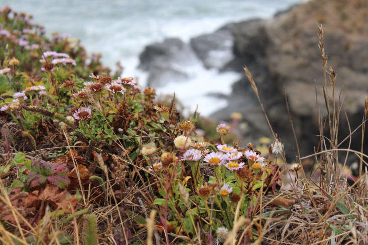 sea-ranch-2-gardenista