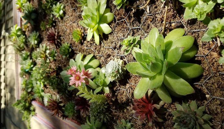 sedum-wall-frame-succulent-garden-marie-viljoen-gardenista