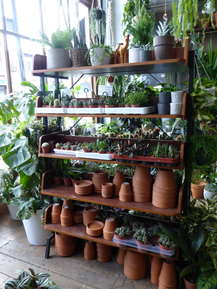 terra-cotta-pots-shelves-conservatory-archives-london-shop-gardenista