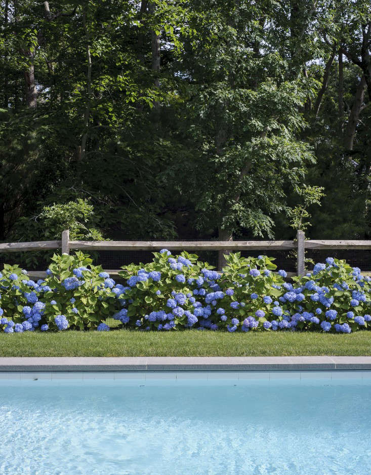 Justine has previously lamented the popularity of hydrangea on her native Cape Cod (they feel &#8