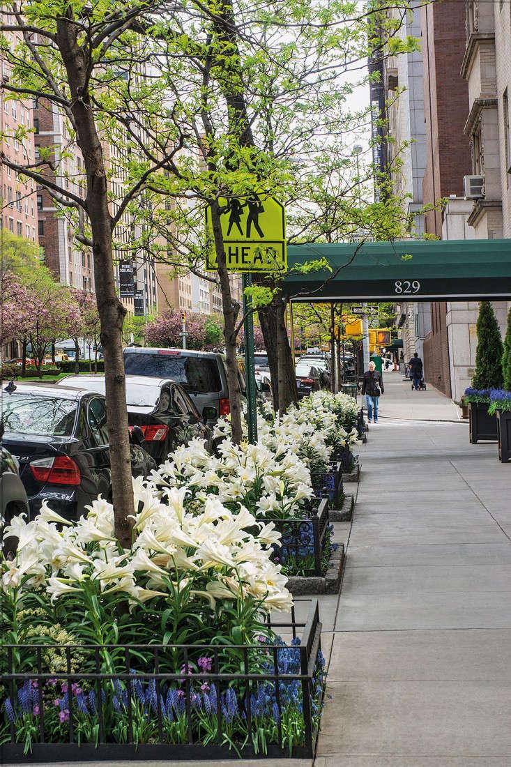 tree-bed-lilies-gardenista