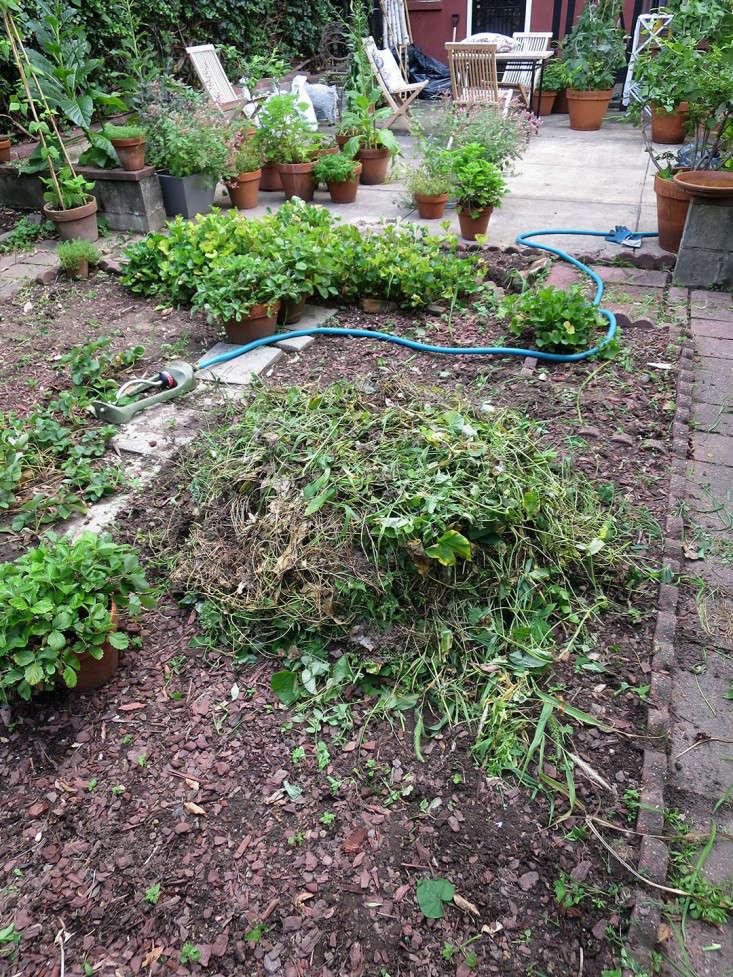 weeding_marieviljoen_Gardenista