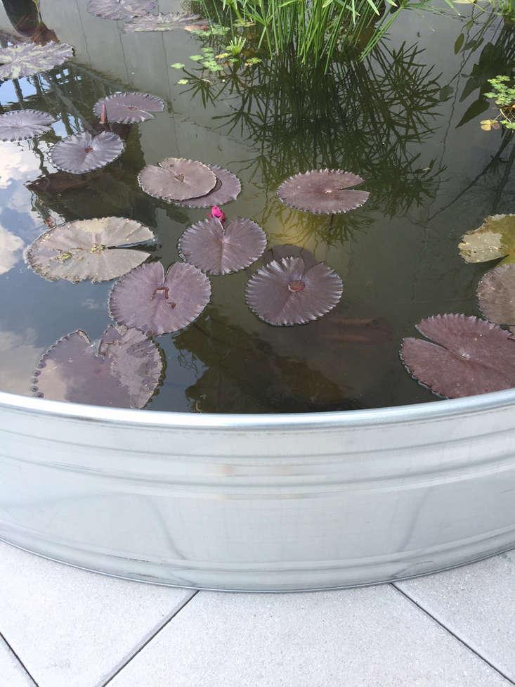 whitney-terrace-overton-ponds-5-gardenista