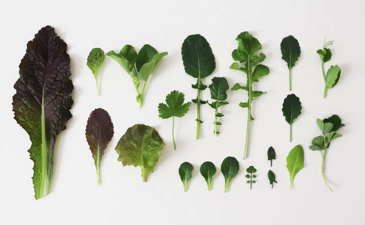 winter-lettuce-leaves-herbs-marieviljoen-gardenista