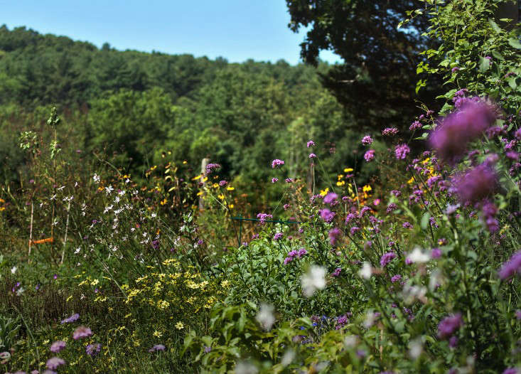 Concord Garden, wildflowers, Gardenista_edited-1