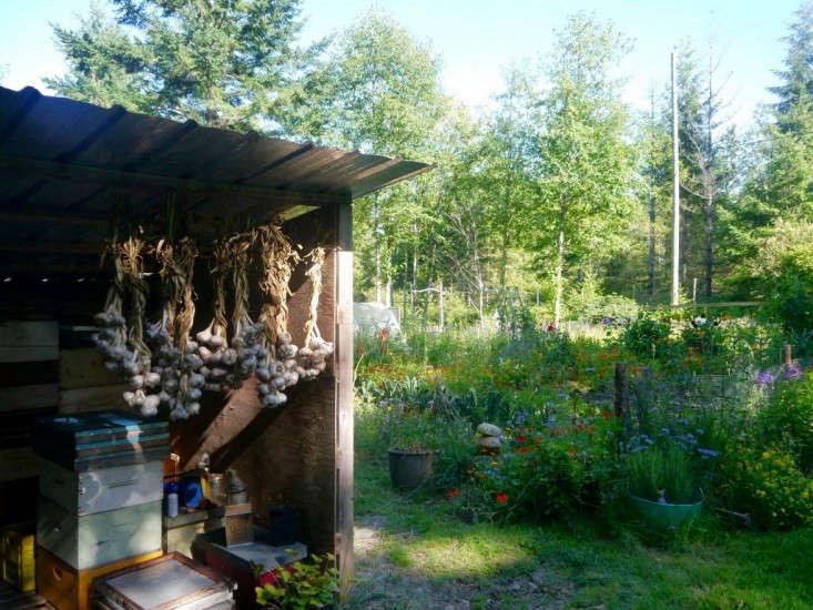 Garlic-Braids-Honey-Grove-for-Gardenista-by-Sylvia-Linsteadt-1024x769 (1)
