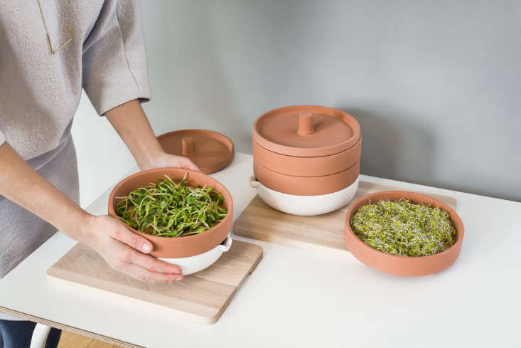 For more, see New from Ikea: A Terra Cotta Sprouter to Grow Microgreens.