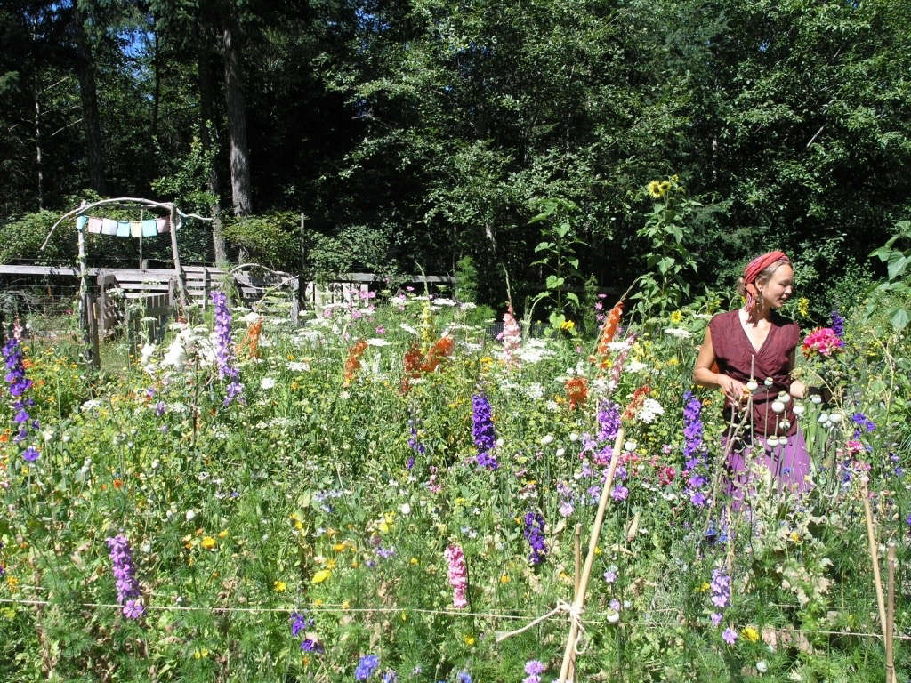 Nao in the Larkspurs Gardenista by Sylvia Linsteadt