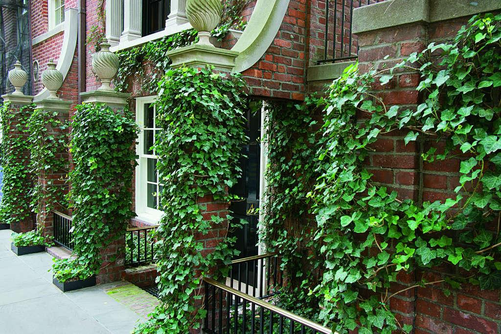 Sidewalk6-Ivy