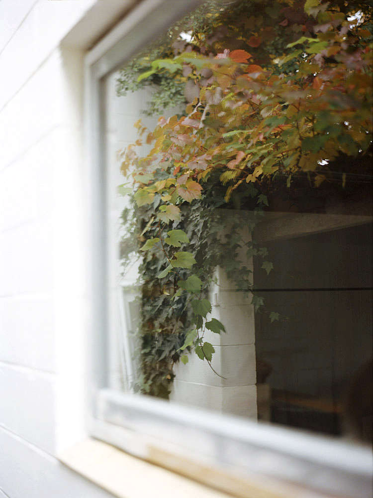 &#8\2\20;The house has a strong relationship with its setting with carefully positioned windows framing the verdant garden landscape,&#8\2\2\1; says Pickford. Photograph by Mary Gaudin.