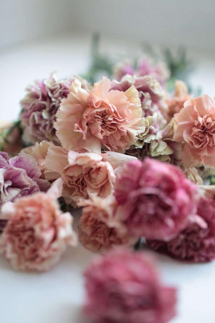 bunch-of-antique-carnations-sophia-moreno-bunge-6.gardenista
