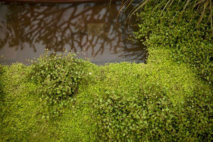 capability-brown-gardens-3-hampton-court-gardenista