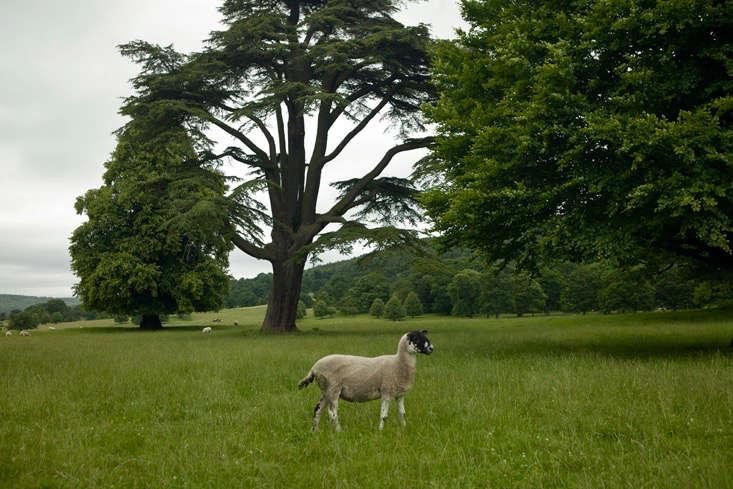 capability-chatsworth-cedar-gardenista