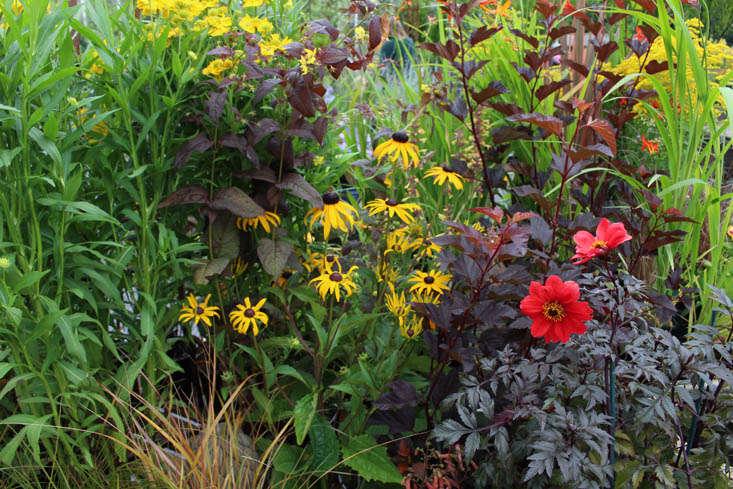 duchy-nursery-display-gardenista