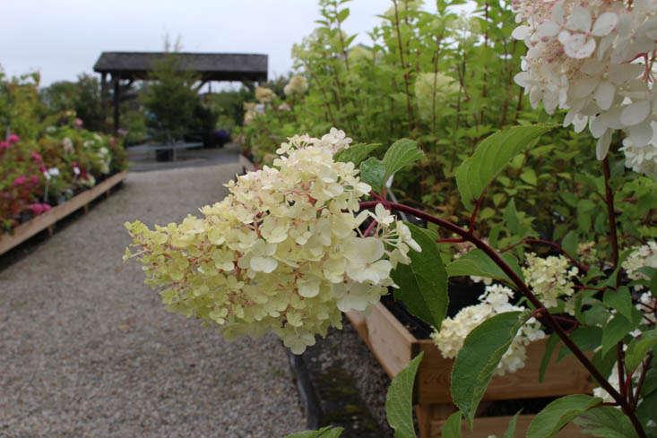 duchy-nursery-exterior-4-gardenista