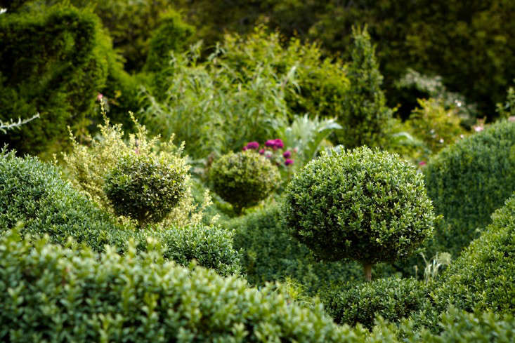 english-boxwood-topiary-ball-hedge-britt-willoughby-dyer-gardenista-R-120716-N118-print