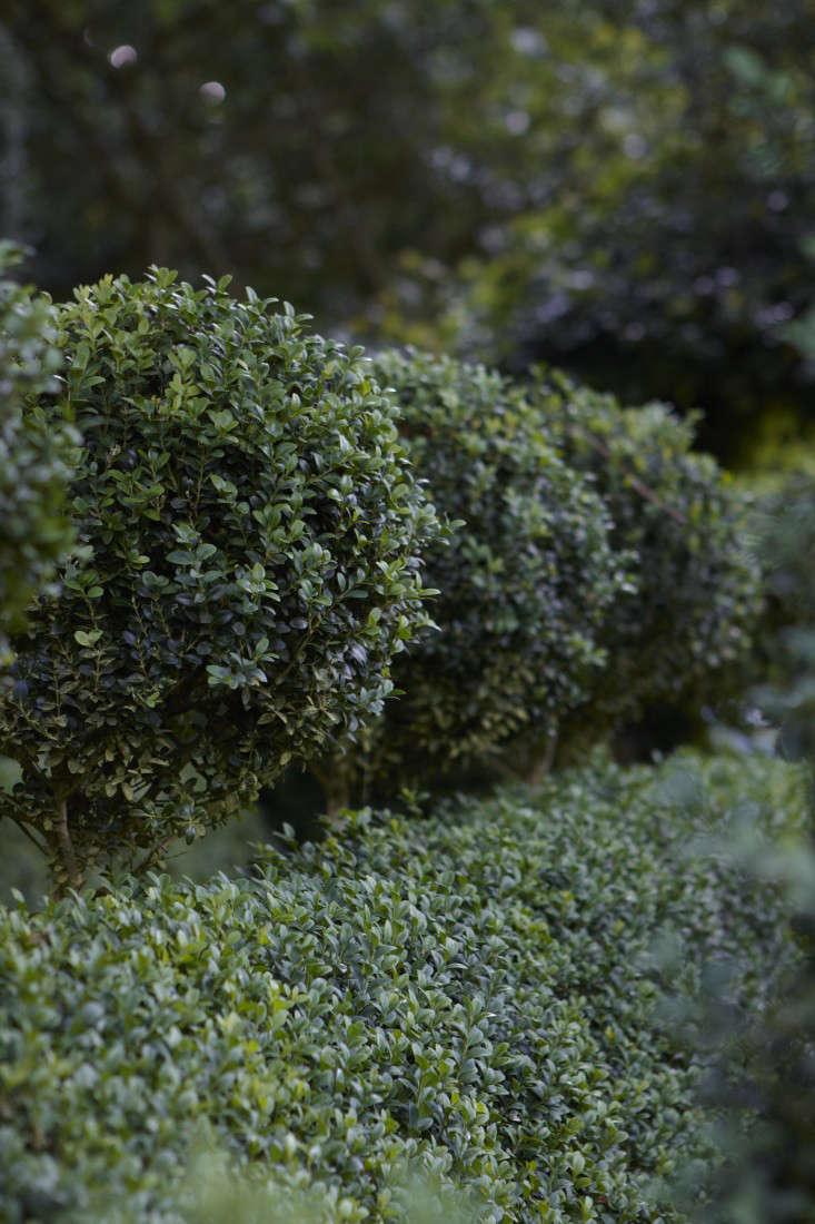 english-boxwood-topiary-balls-britt-willoughby-dyer-gardenista-R-120716-N20-print