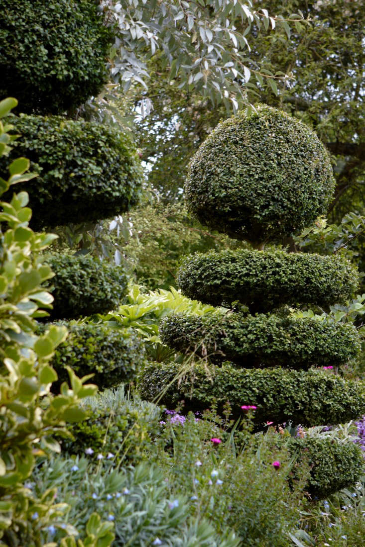 english-boxwood-topiary-britt-willoughby-dyer-gardenista-R-120716-N30-print
