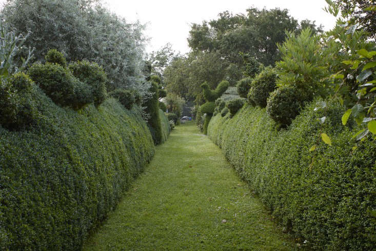 english-boxwood-topiary-hedges-bird-mown-path-britt-willoughby-dyer-gardenista-R-120716-N51-print