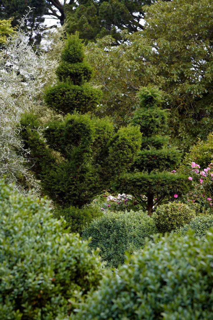 english-boxwood-topiary-trees-britt-willoughby-dyer-gardenista-R-120716-N45-print