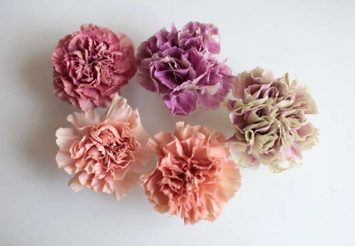 five-varieites- antique-carnations-sophia-moreno-bunge-10-gardenista